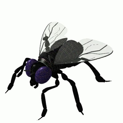 Vliegen doodslaan? Ze zien ons aankomen!