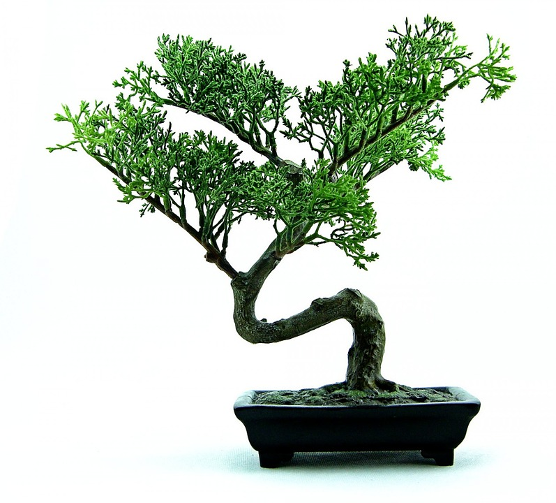 Bonsai, hoe begin je eraan?